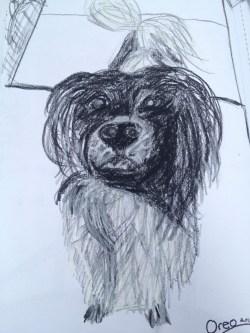Oreo the puppy