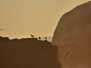 gulls on a cliff