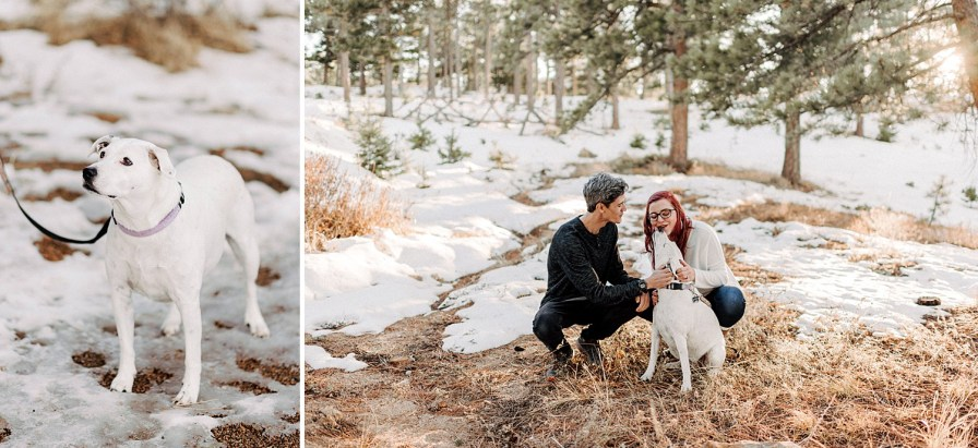 including your dog in engagement photos