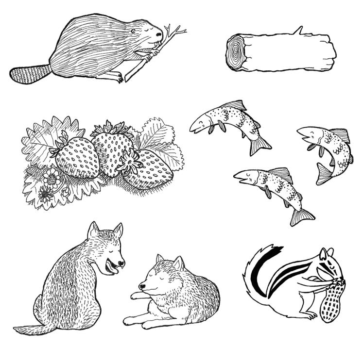More flora & fauna drawings Erika Schnatz