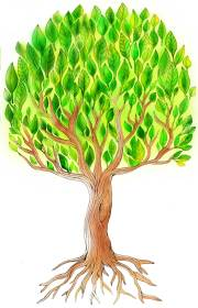 """Tree illustration for by Erina Dempsey for children's book website """"The Little Snail"""""""