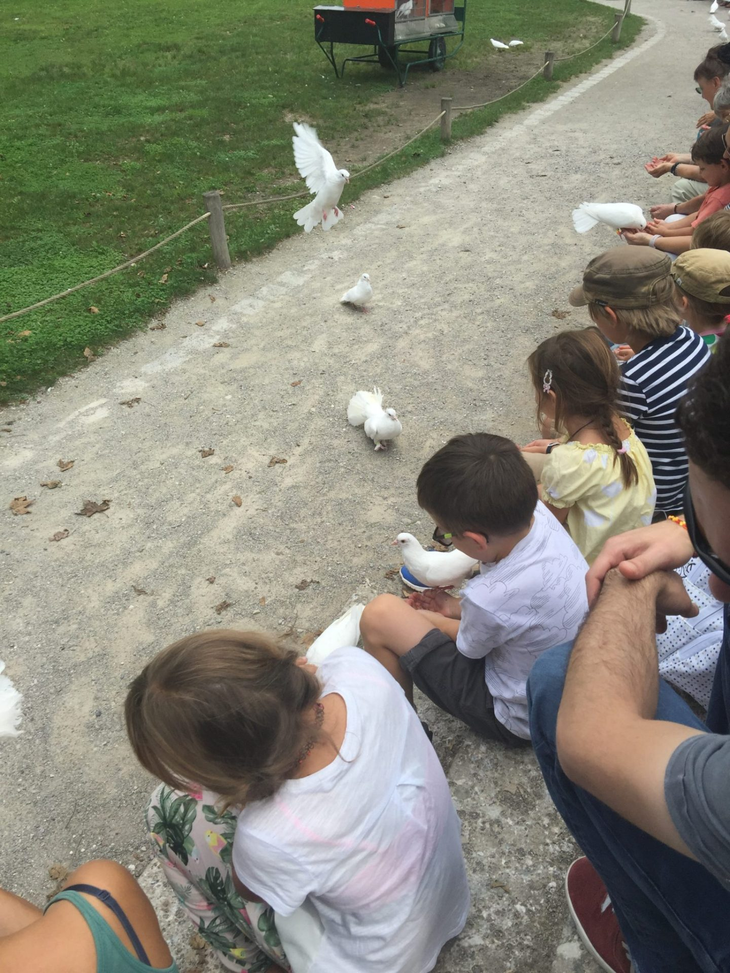 Feeding the acrobatic pigeons at the Hellabrunn Zoo