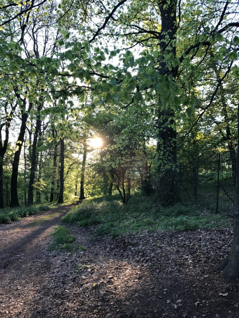 Lovely walk in the forest on Sundays, as nothing else is open in Germany!