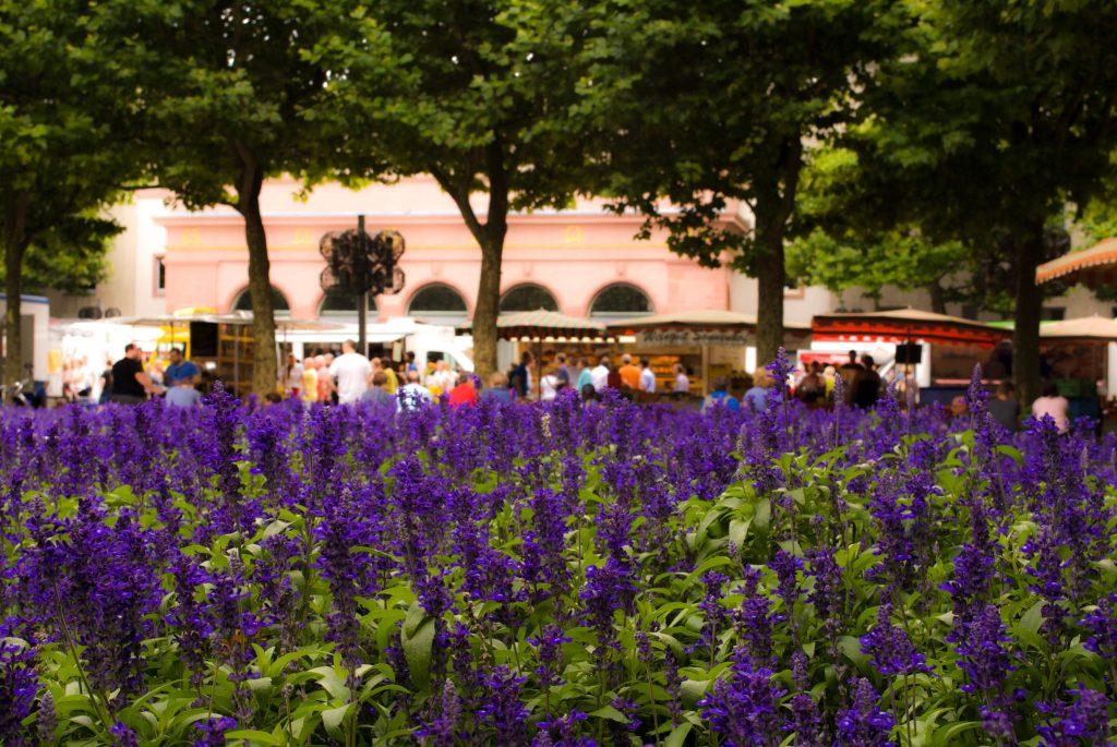 Flower bed near the Mainz Marktplatz