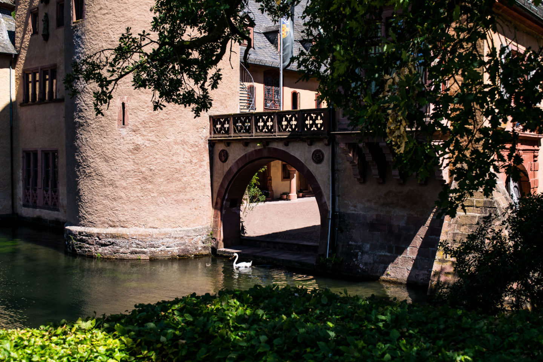 Regal swan glides across the lake at Schloss Mespelbrunn