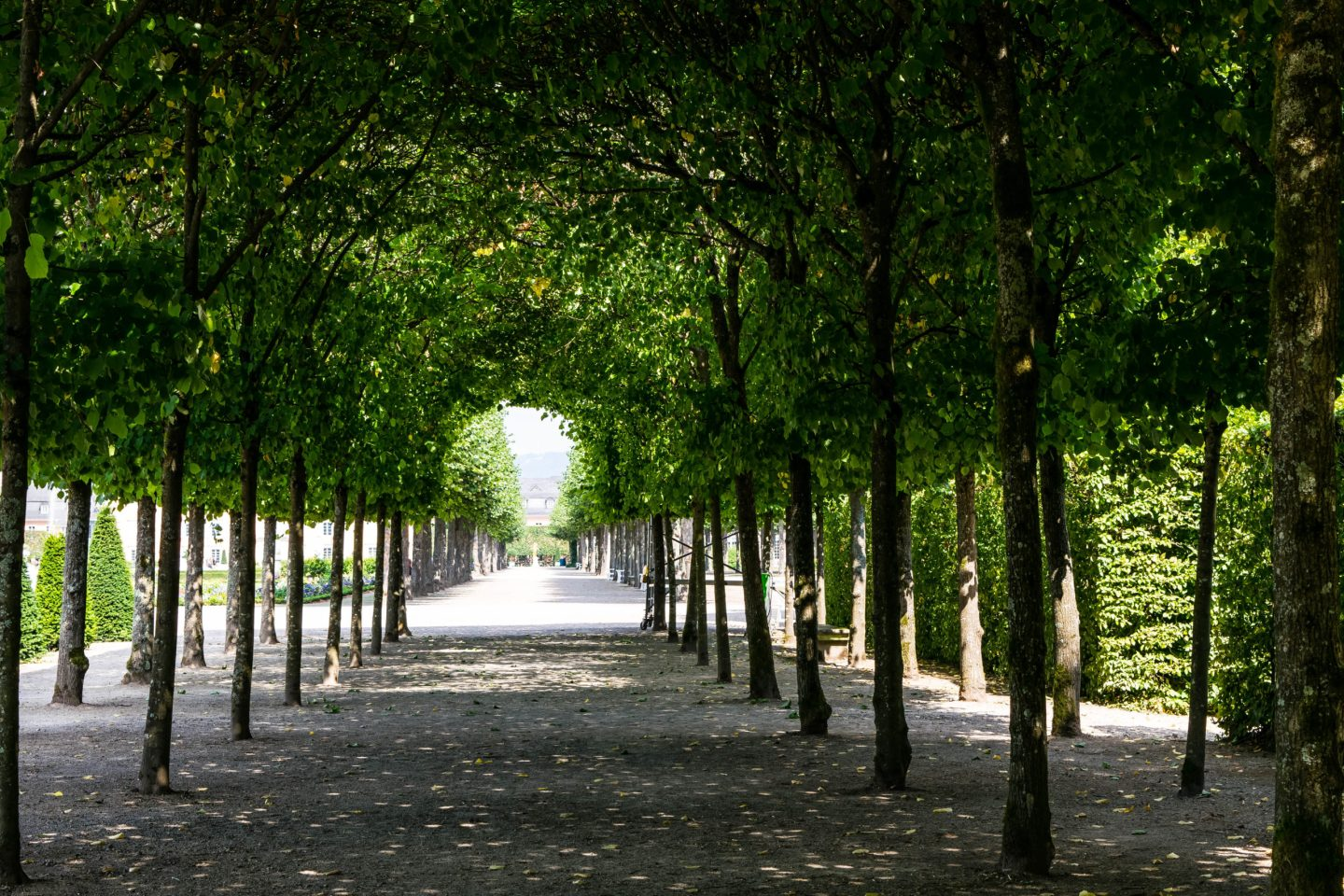 Beautiful tree tunnel in Schlossgarten Schwetzingen