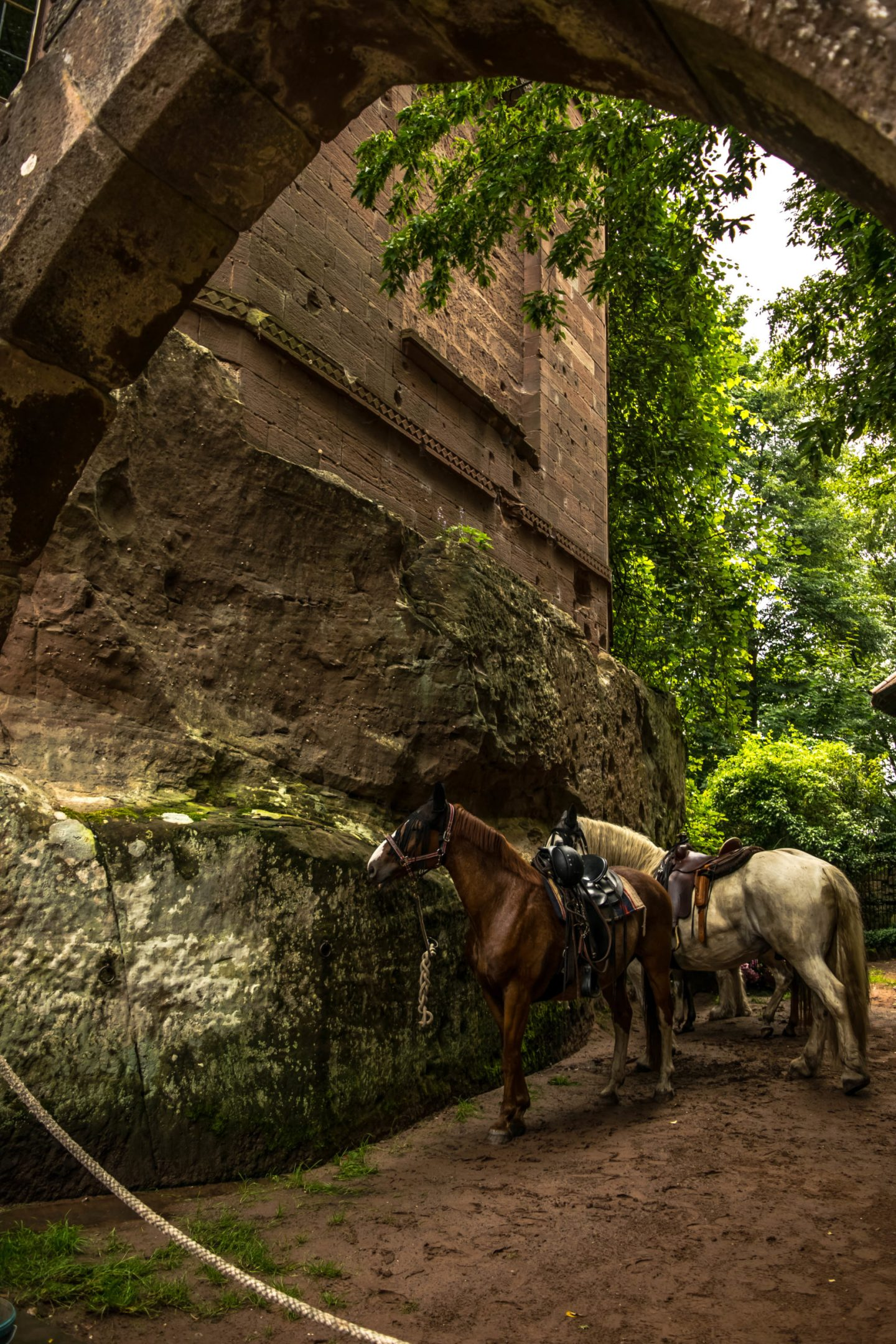 Local equestrians were going through a ride for the forest, and their horses tied up here looked so picturesque.