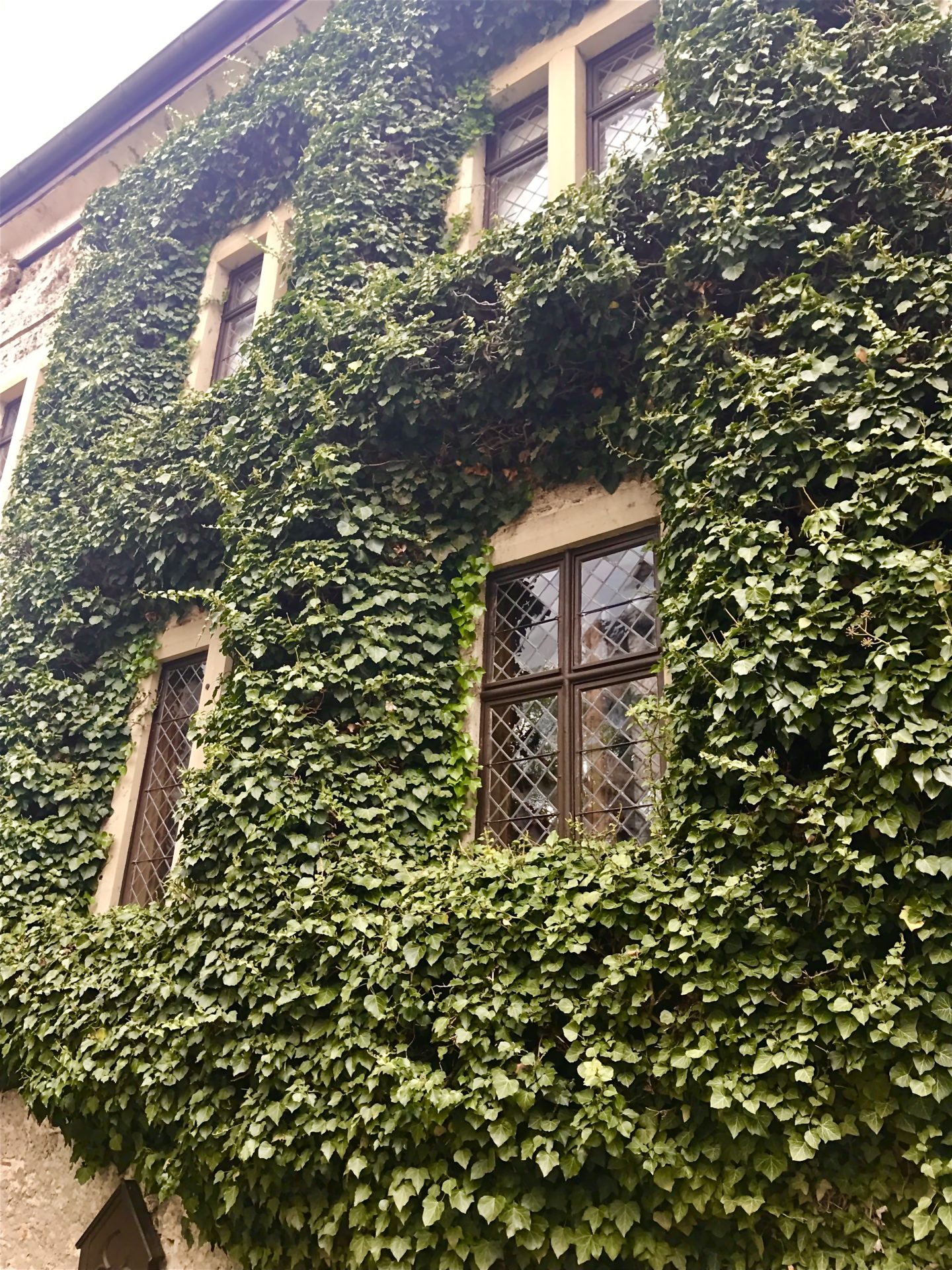 Ivy-covered building in the courtyard of Schloss Lichtenstein