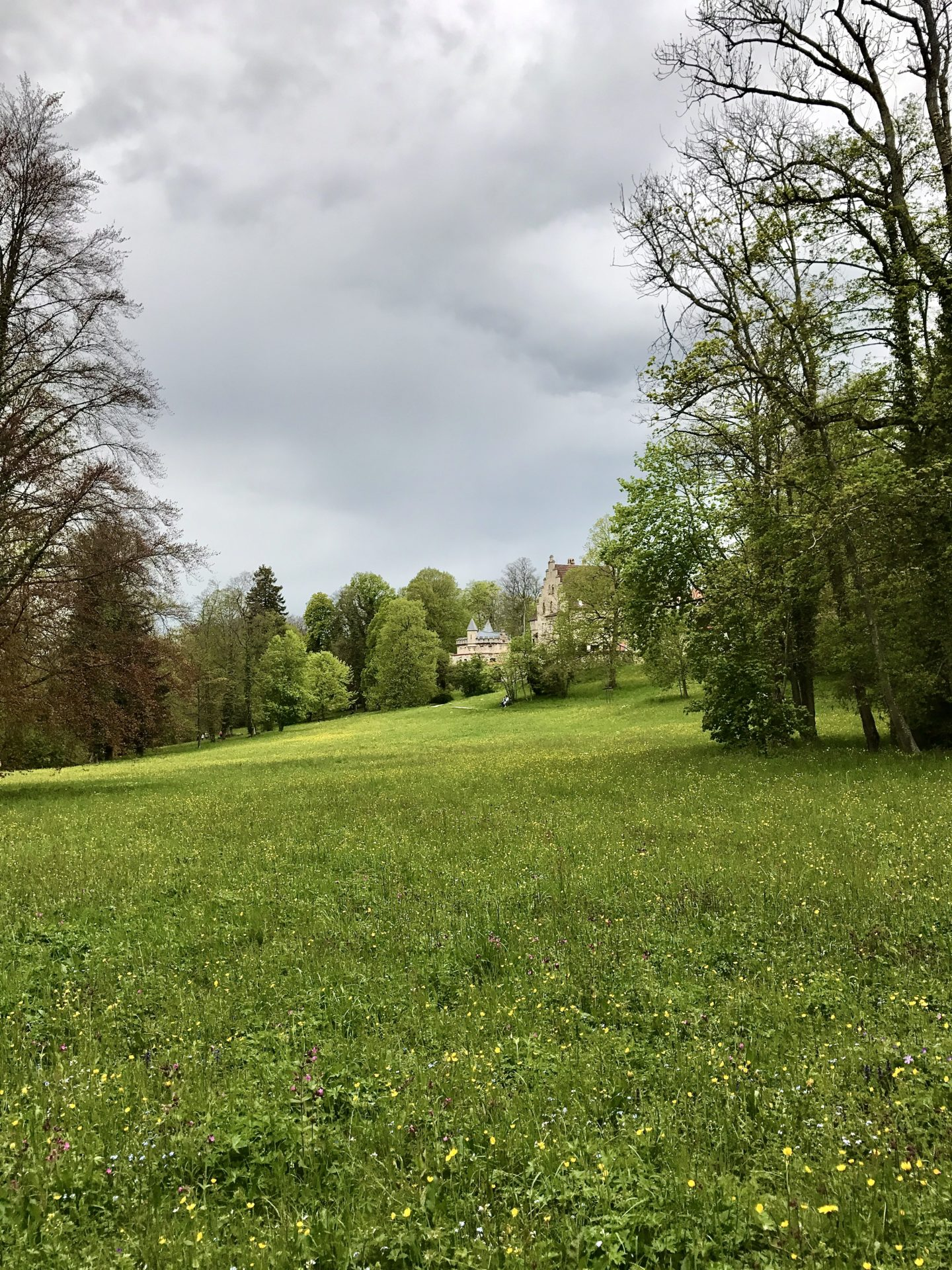 Green meadow next to Schloss Lichtenstein.