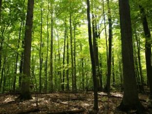 Camp Lael Woods