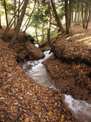Manistee River Trail, Lower Peninsula, October 2016