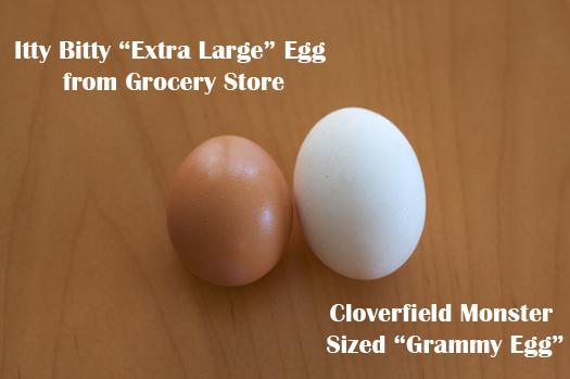 Egg vs Egg