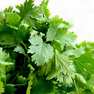 Cilantro: Friend or foe?