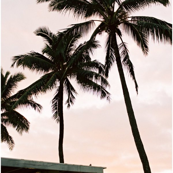 Photo of palm trees at sunset on Kauai by Erin Gregerson.