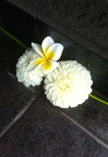 Doorstep flowers