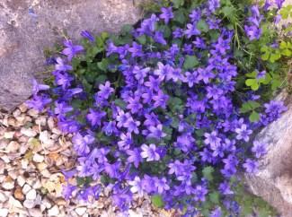 Purple flowers on the doorstep