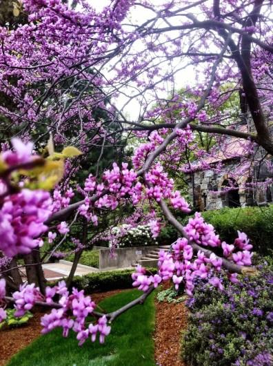 Tufts University chapel thru th blossom