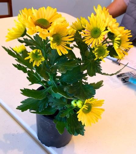 lS&F Yellow flowers