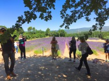 Saturday. Lavender fields on way to Rousillon