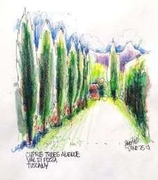 Barga. Perspective and olive trees