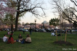CherryBlossomVisitors