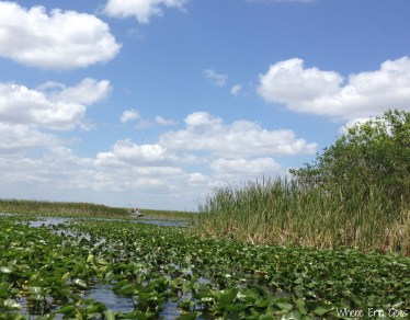 Everglades | Where Erin Goes