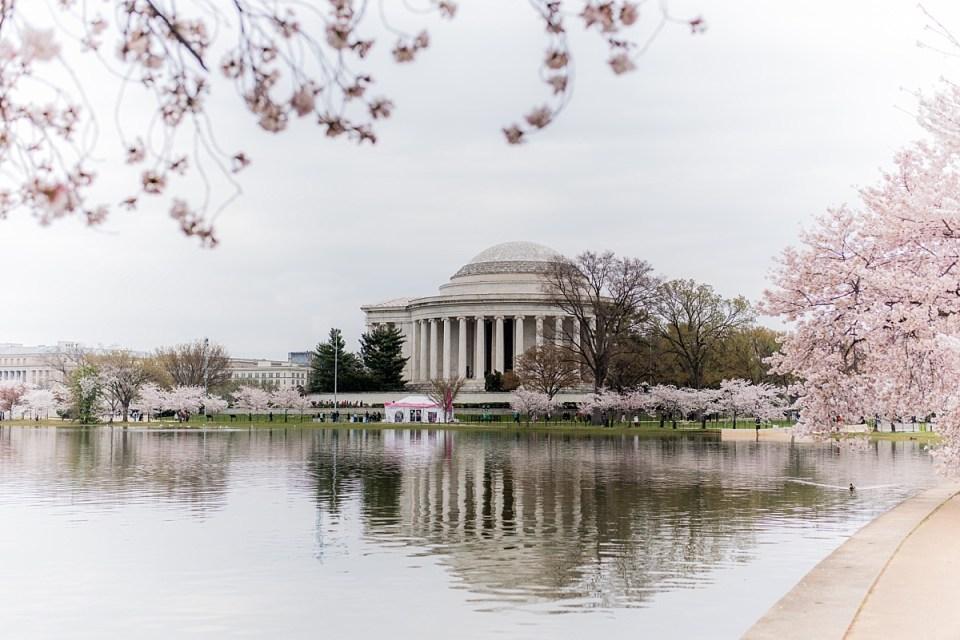 Cherry Blossom Engagement Session Jefferson Memorial