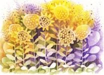 sunflower1-2