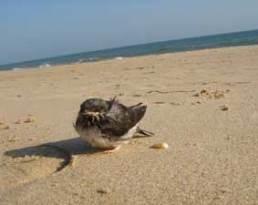 manuel en la playa