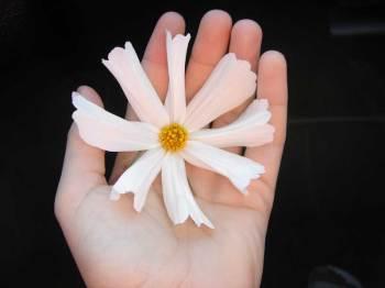 flor a un poeta no-muerto
