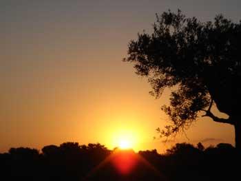 una casa entre árboles, o el sol que nos abriga
