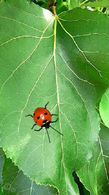 my bug serangga by erit07