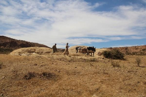 Eritrea farming