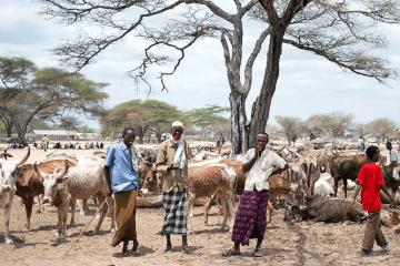 Somali herders