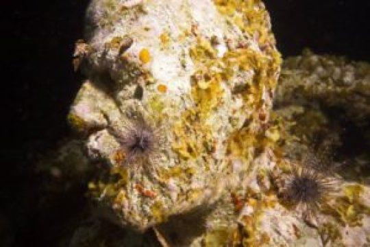 Las esculturas han regenerado los arrecifes de coral