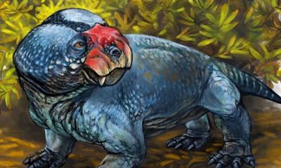 Bulbasaurus phyloxyron