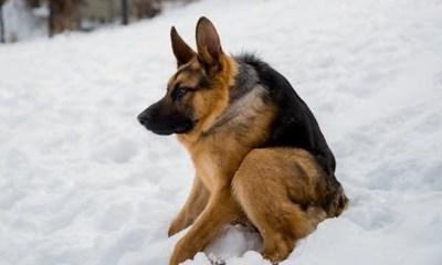Quasimodo, el perro que cautivó a Facebook