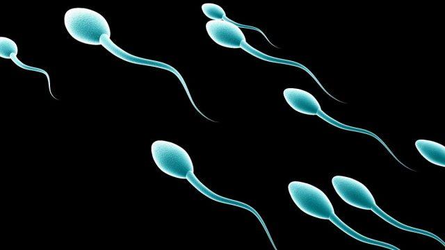 Anticonceptivo masculino esperma