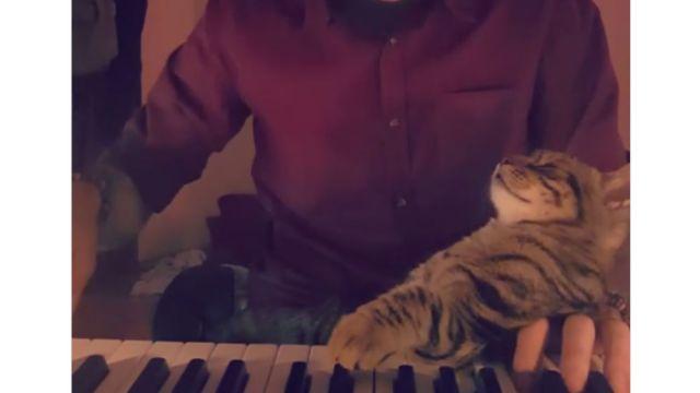 Gato piano Instagram Sarper Duman