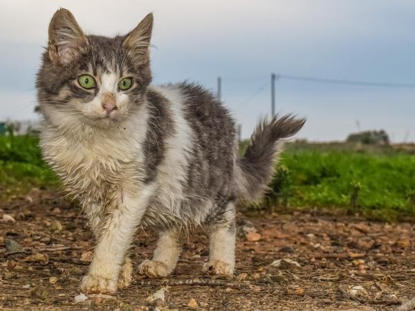 Crean perfume que huele como a gatos, sí las mascotas