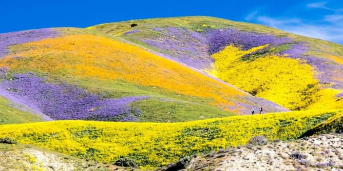 super bloom en California