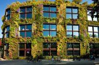 El Museo de Quai Branly en París tiene un jardín vertical con 15,000 plantas.