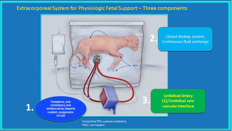Corderos bebé se han mantenido vivos gracias a un útero artificial