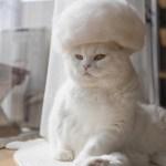 Estas son fotos de gatos usando su propio pelo como divertidos sombreros