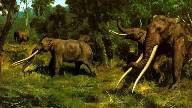 Ilustración de un mastodonte, pariente de los elefantes