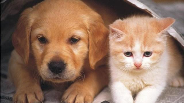 Taiwan prohibió el consumo de la carne de perro y gato