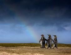 Tres pingüinos caminando hacia un arcoiris