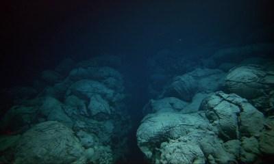 La Tierra parece estar escupiendo vida desde sus entrañas desde la Fosa de las Marianas