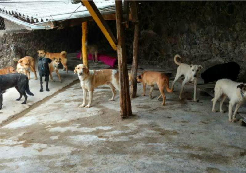 Denuncian a señora en Tepoztlán por tener a 151 perritos en malas condiciones