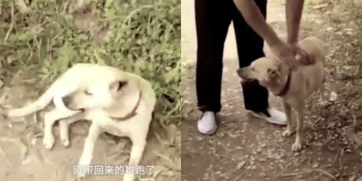 Un perro rescató a un bebé chino que fue enterrado vivo